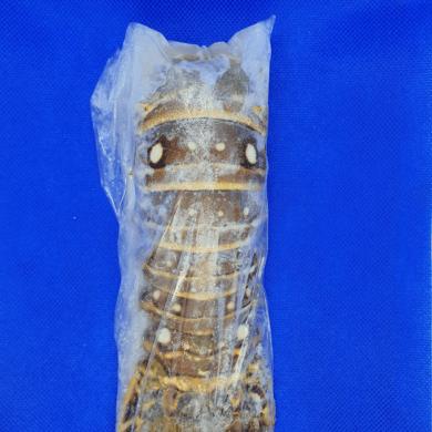 Lobster Rock Tail Raw 140/200g FROZEN