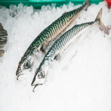 Mackerel Whole Large